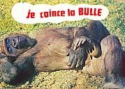 52165_gorille_je_coince_la_bulle.jpg: 800x573, 280k (14 octobre 2017 à 22h51)